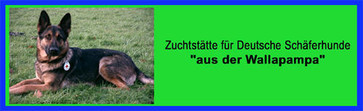 """Zwinger """" aus der Wallapampa """""""