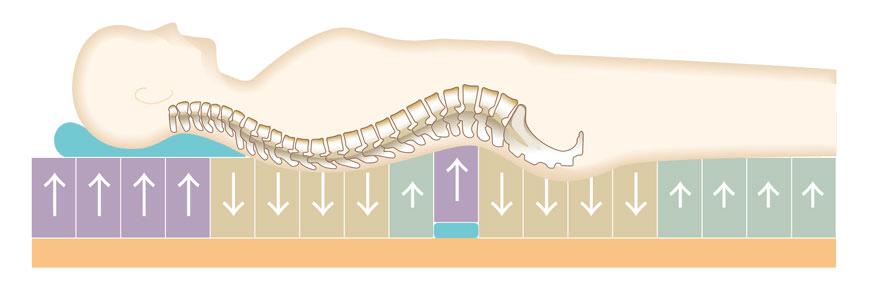 理想的な寝姿勢 背骨とお尻は沈むが頭から首にかけてや腰の部分はしっかり支えられている