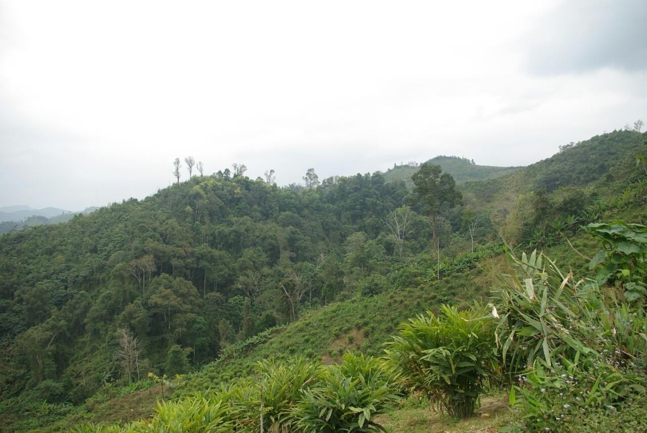 Kulturpflanzen neben dem Bambusdschungel.