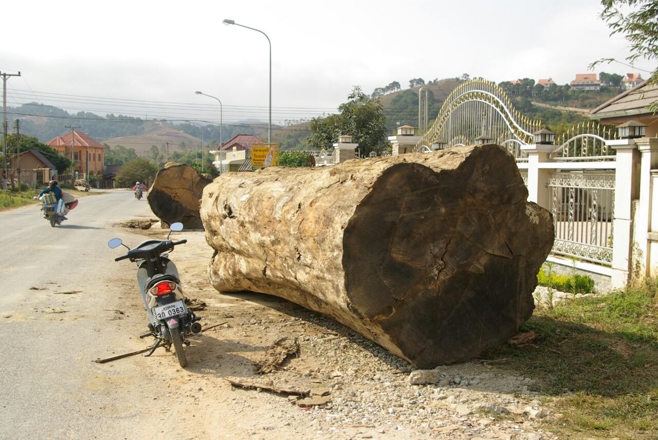 Holz ist ein Reichtum des Landes