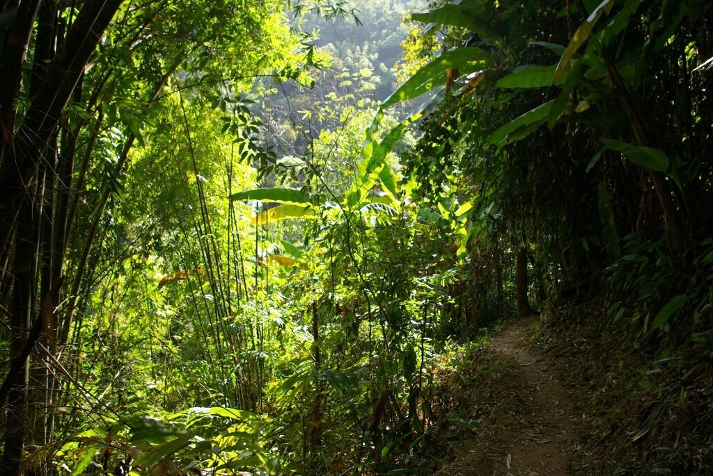 Spaziergang durch den Dschungel.