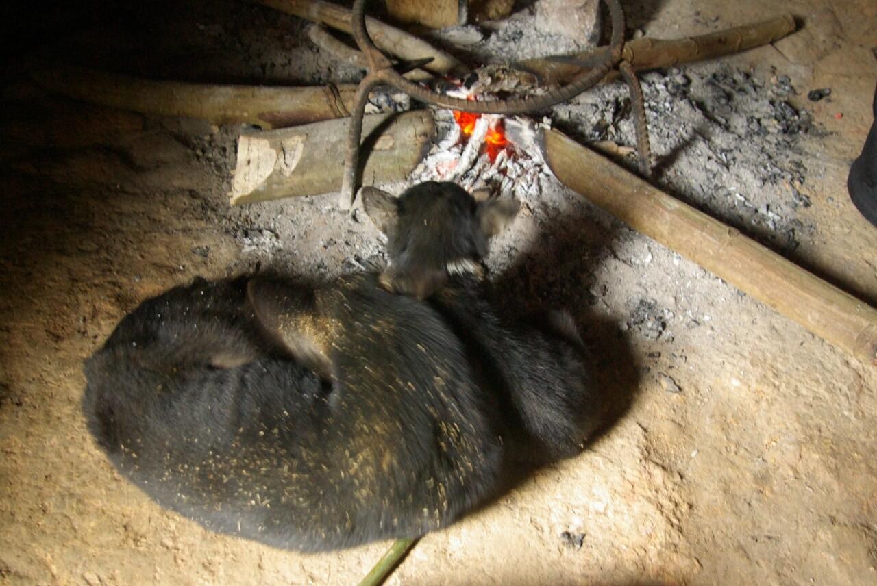 Wenn es abends kühl wird, suchen sich auch die Hunde einen Platz am Feuer.