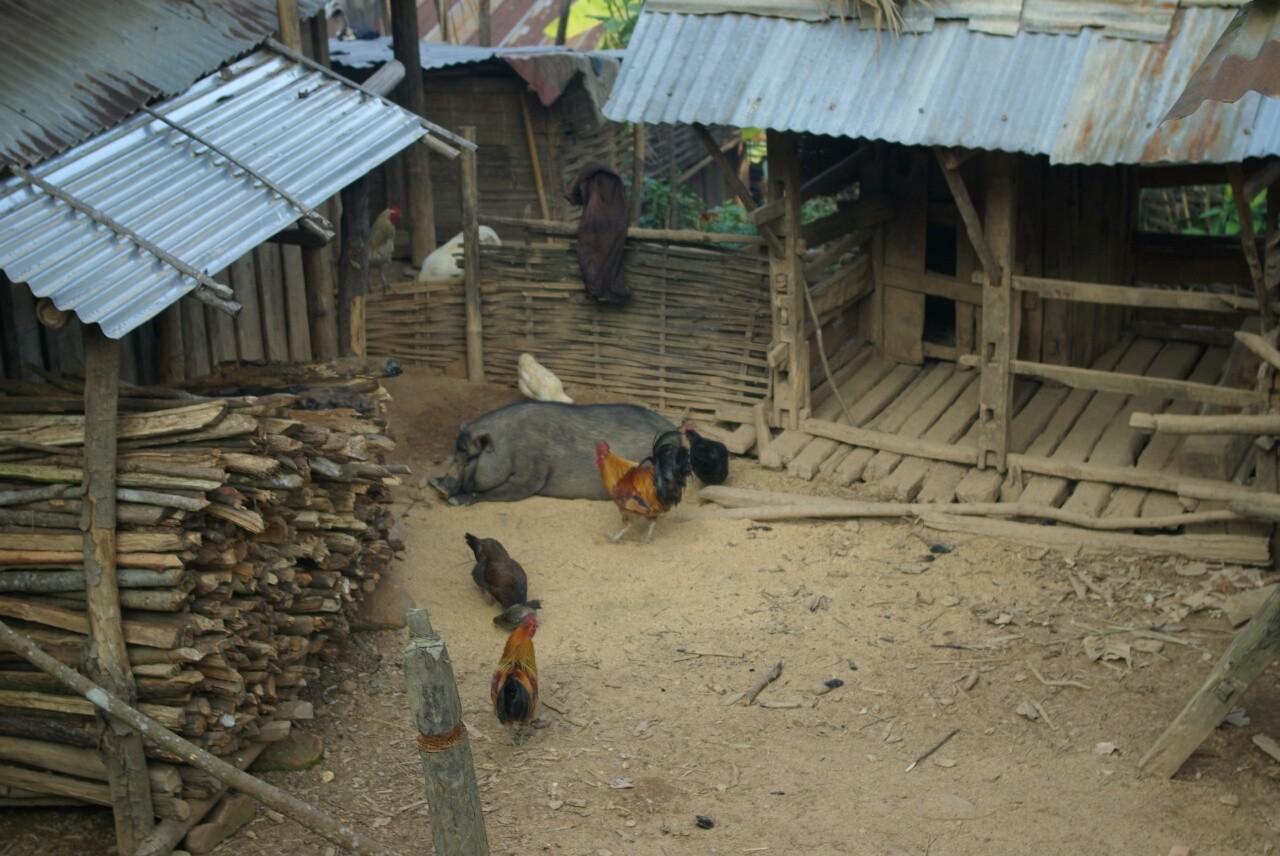 """Alles darf sich im Dorf frei bewegen, auch die reichlich vorhandenen gefiederten """"Wecker""""."""