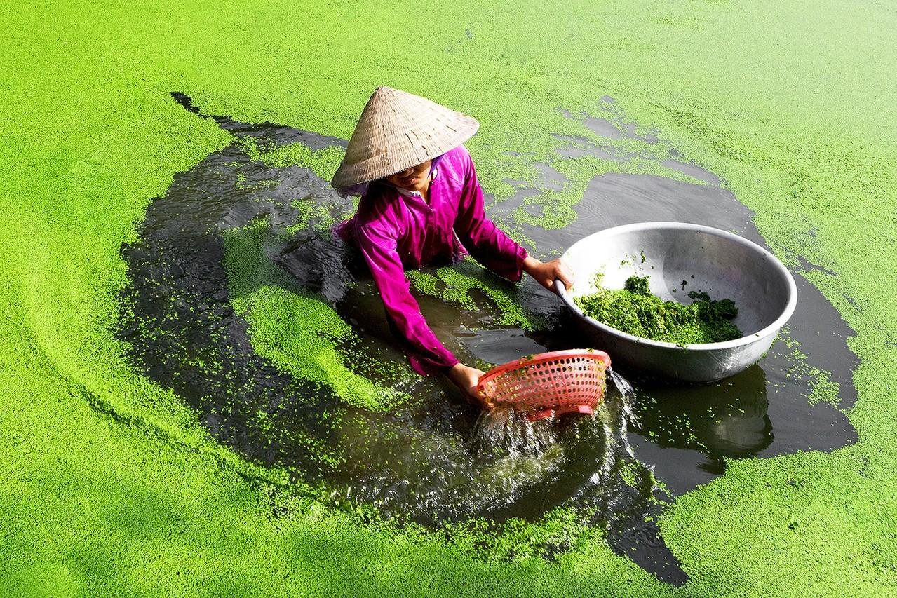 Premfoto 2012 - Phi Long Vo EFIAP (Vietnam)- Harvest - Recolta