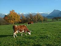 Die Gegend ist von Landwirtschaft geprägt