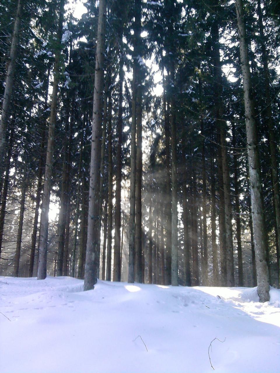 Komm und genieße unsere Herrliche Winterlandschaft