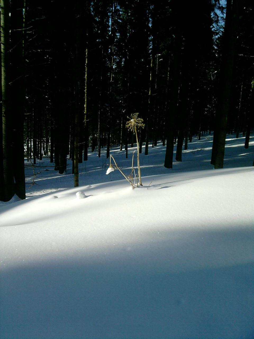 Inspirierende Spaziergänge in herrlicher Winterlandschaft in der Nähe unseres Hauses