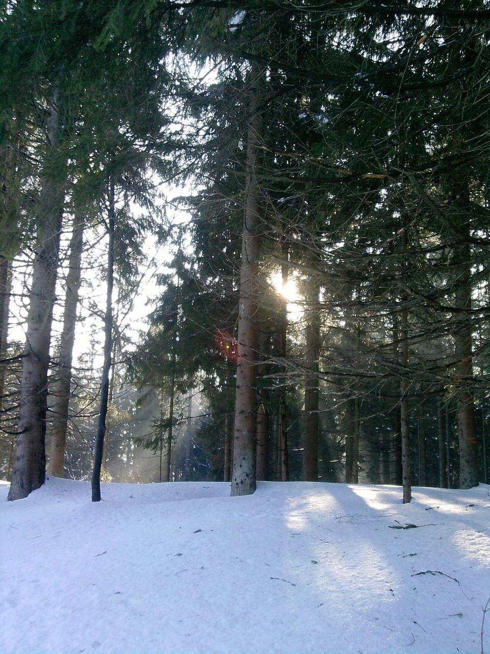 Stehen bleiben und in die Natur einhorchen