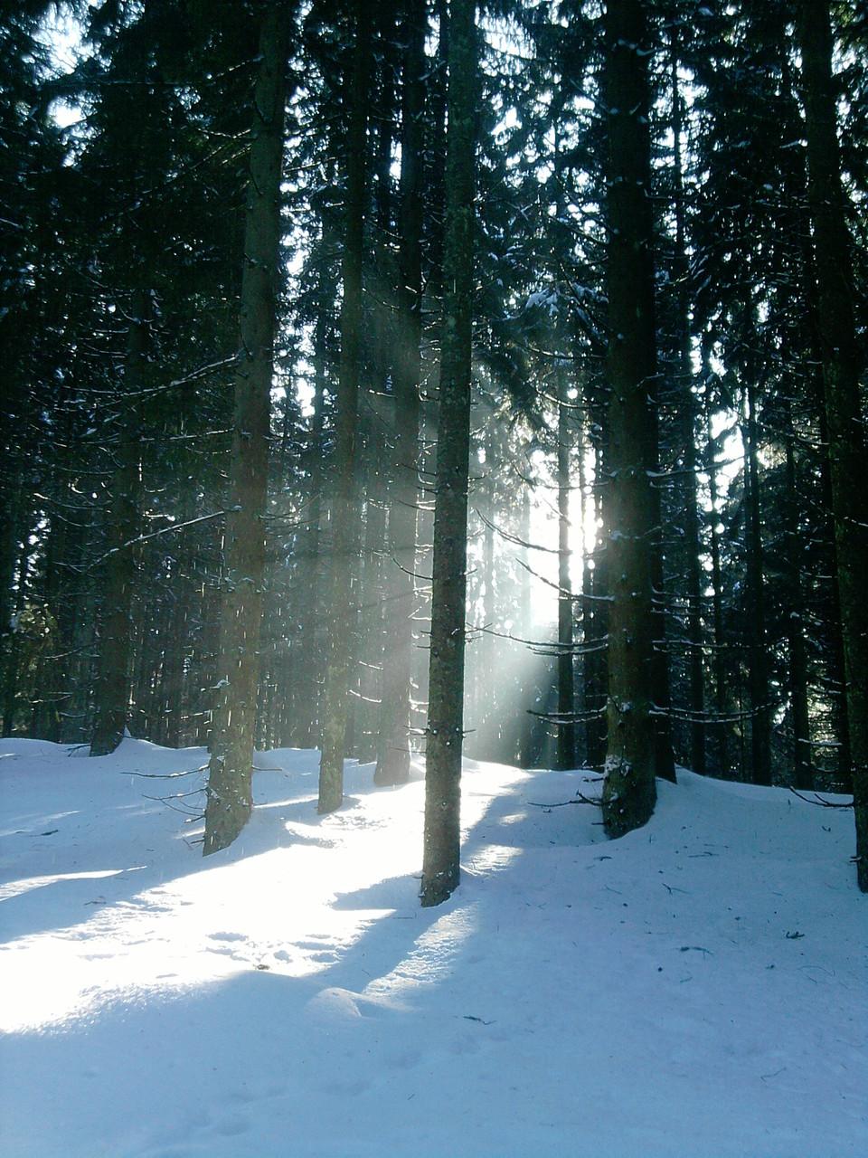 Unternehmungen mit Schnee.-u.Wanderschuhen-u.Langlaufski