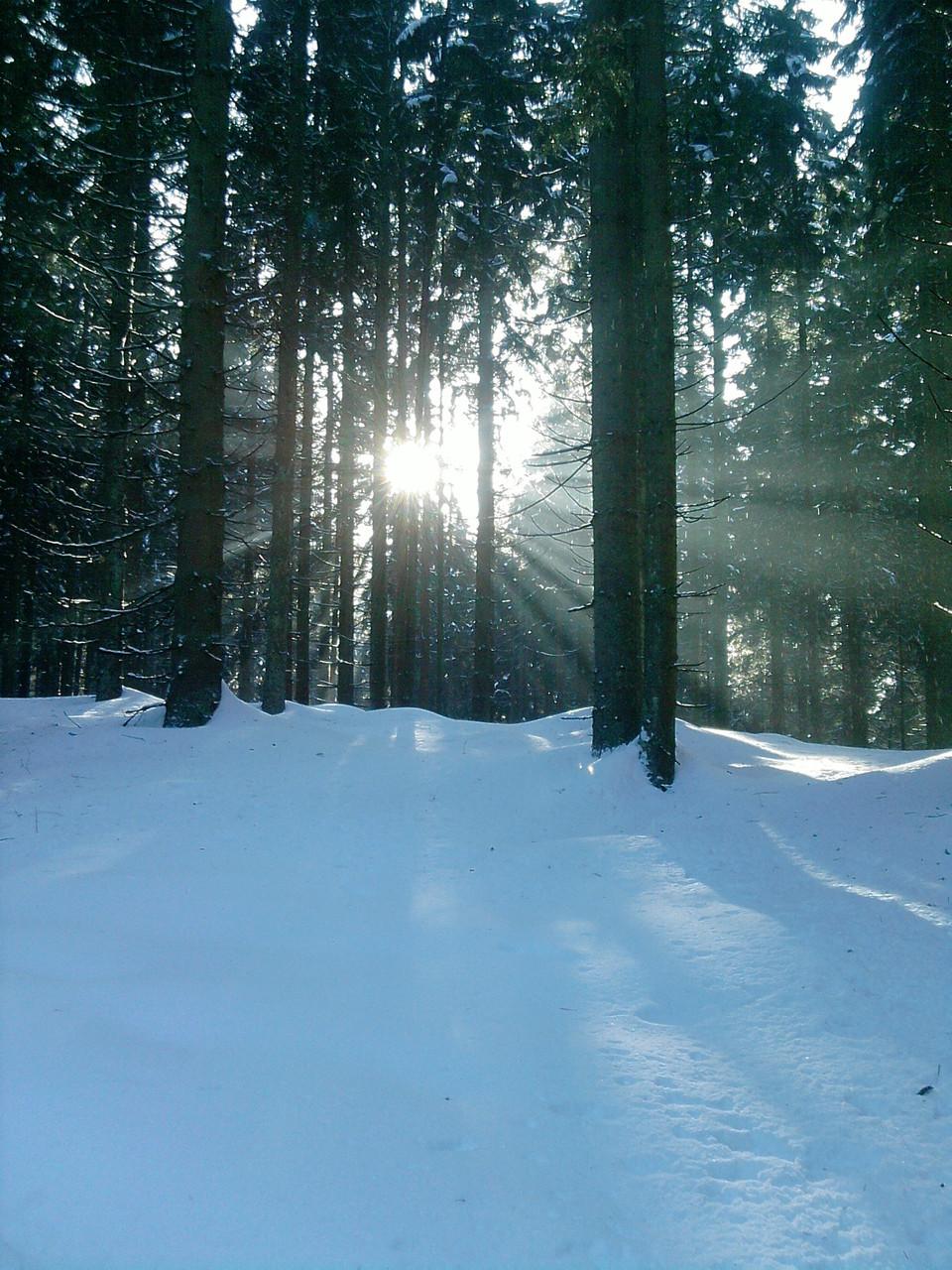 Eintauchen in Sonnendurchzogene Winterlandschaft