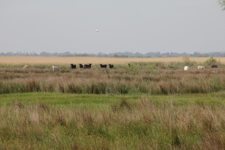 Paysage dans la réserve naturelle des Marais du Vigueirat
