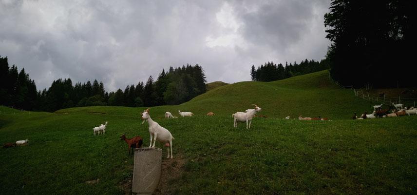 Glacenproduktion Schweiz besichtigen