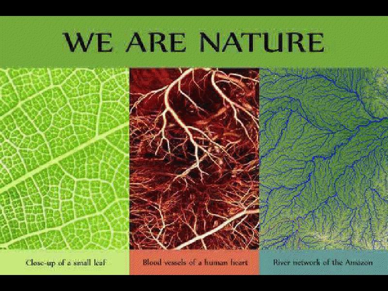 Obsérvese la semejanza entre el sistema de distribución de sangre el cuerpo humano, de savia una hoja de cualquier planta y un sistema fluvial de la tierra.