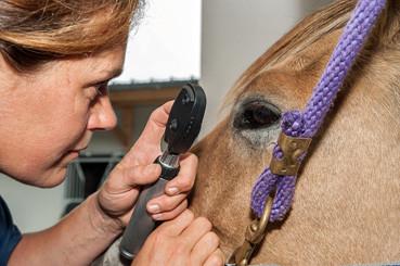 Tierarzt in Milte