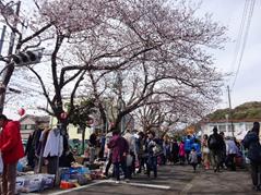 第19回北久里浜桜まつり