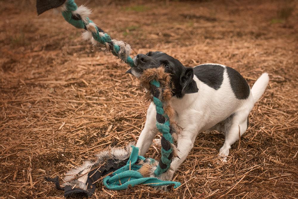 Positive Verstärkung: Modernes Hundetraining in Straelen und Duisburg