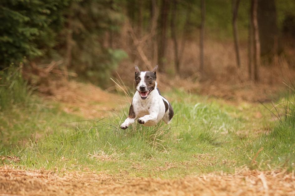 Sinnvolle Beschäftigungsmöglichkeiten für eure Wildlinge - Hundetrainer Hundetrainerin Bochum Herne Castrop Rauxel - Hundeschule Bochum Herne Castrop Rauxel Ruhrgebiet - Hundetraining Clickertraining Clicker Marke
