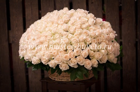 9-609 (151 роза