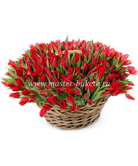 9-505 (101 тюльпан)