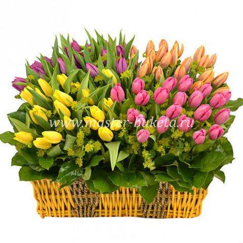 9-516 (101 тюльпан)
