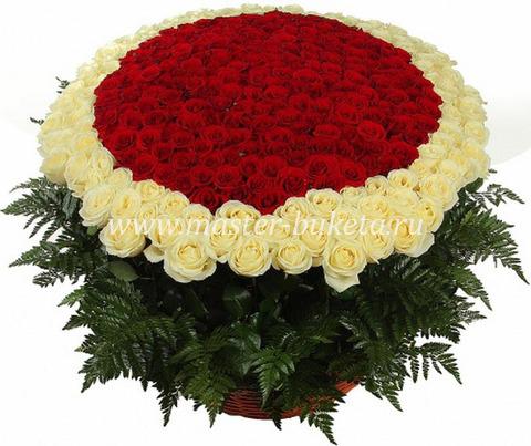 9-907 (501 роза)