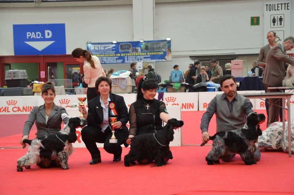 Reggio Emilia: BOB & BOS e miglior giovane Cocker Spaniel Inglese