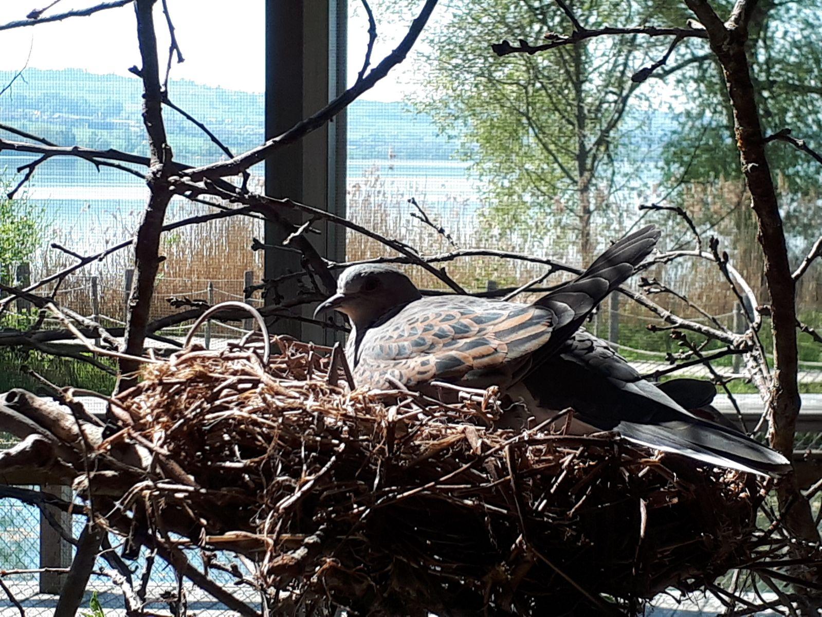 Vogelwarte Sempach
