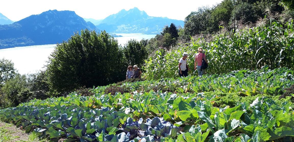 Gemüsegarten Unterfrohmattberg