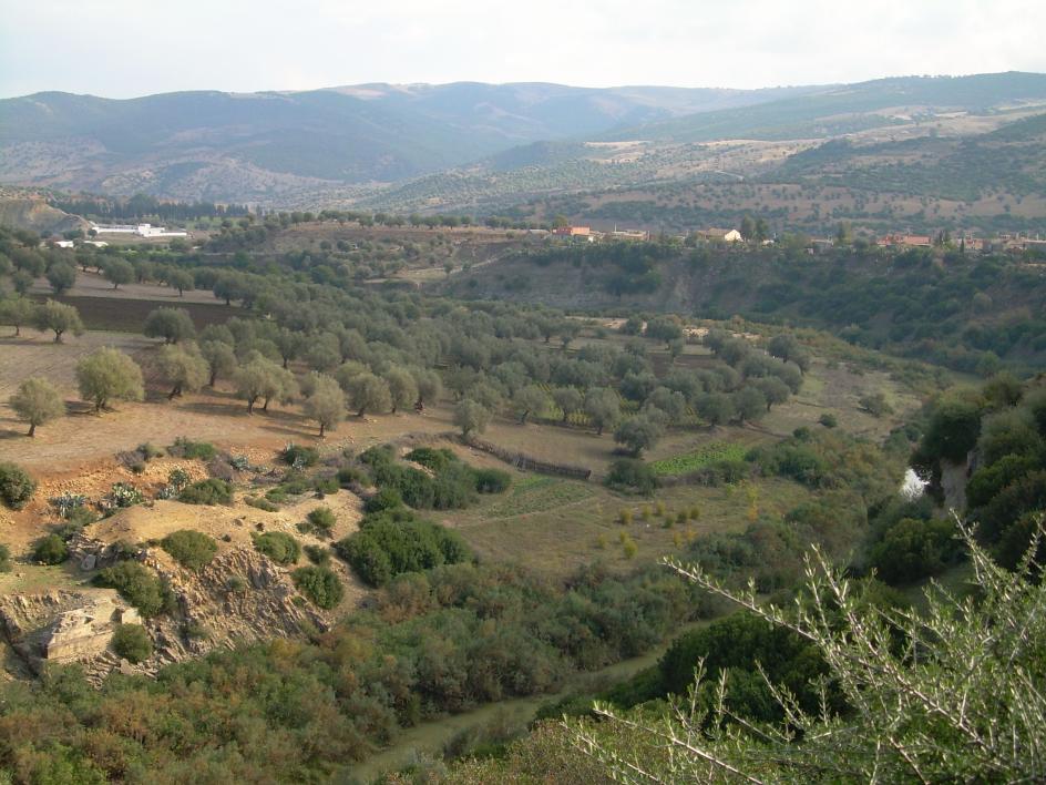 Oued Cherf à Medjez Amar, 2006