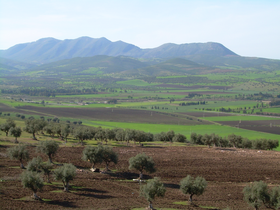 The Seybouse Valley near Guelma, 2008