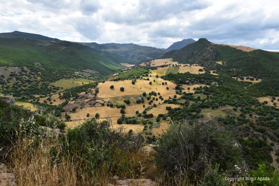 Landschaft bei Roknia in der Nähe von Guelma