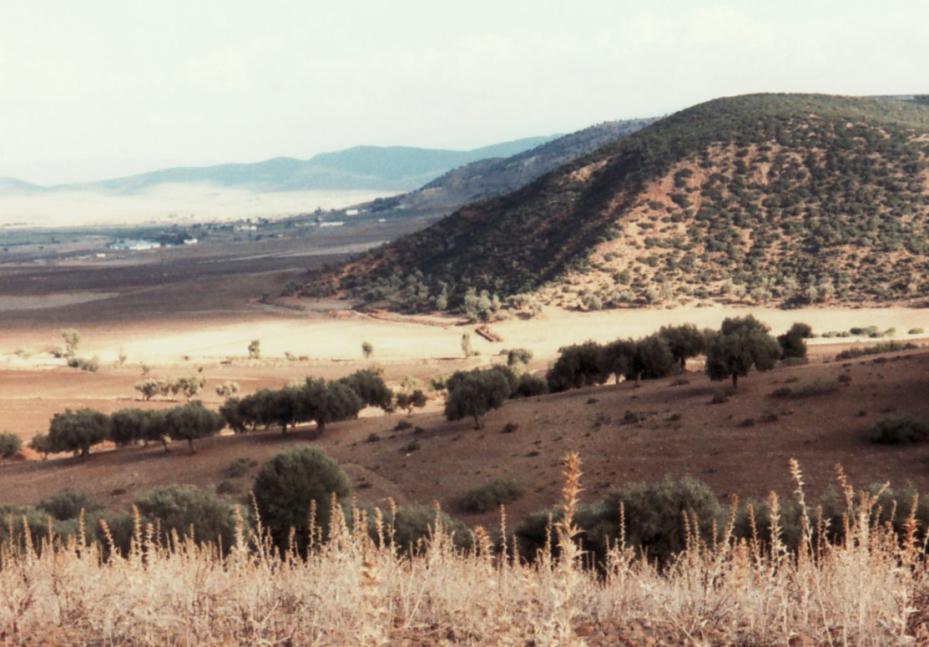 Guelma - Landschaft bei Boumahra Ahmmed