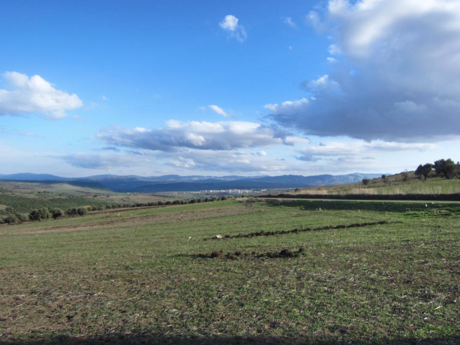 Impression aus dem Tal der Seybouse bei Guelma