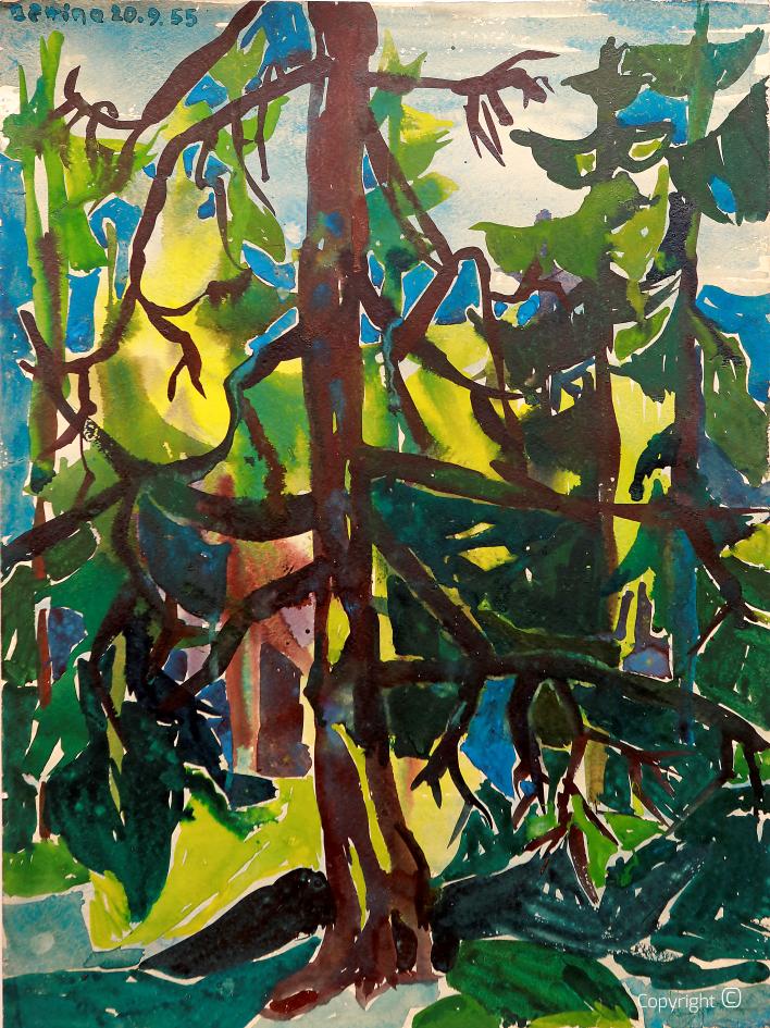 Impression de forêt dans l'Allgäu, 1953