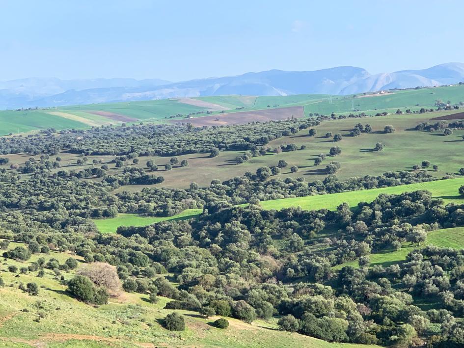 Paysage sur le versant du massif de Mahouna