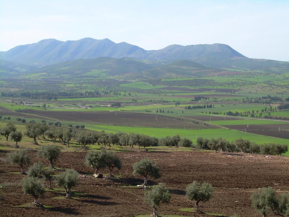 La vallée de Seybouse près de Guelma, 2008