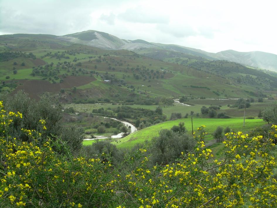 Landschaft bei Guelma