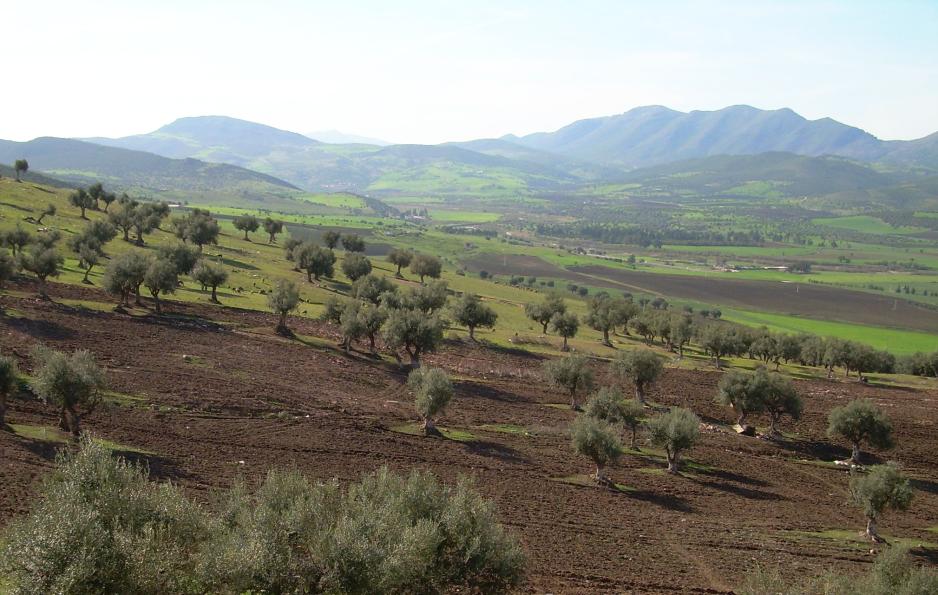 Panorama de la vallée de Seybouse, 2008