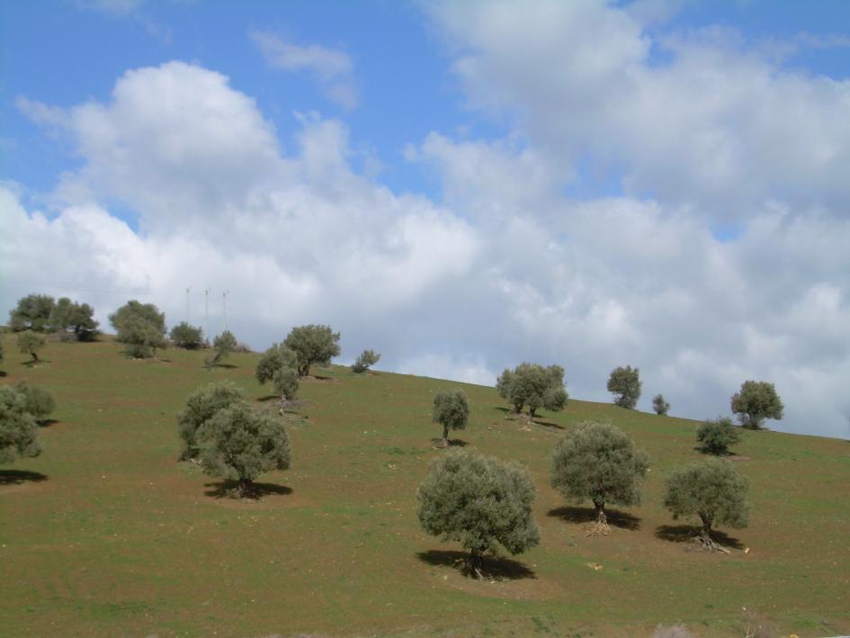 Landscape arround Guelma