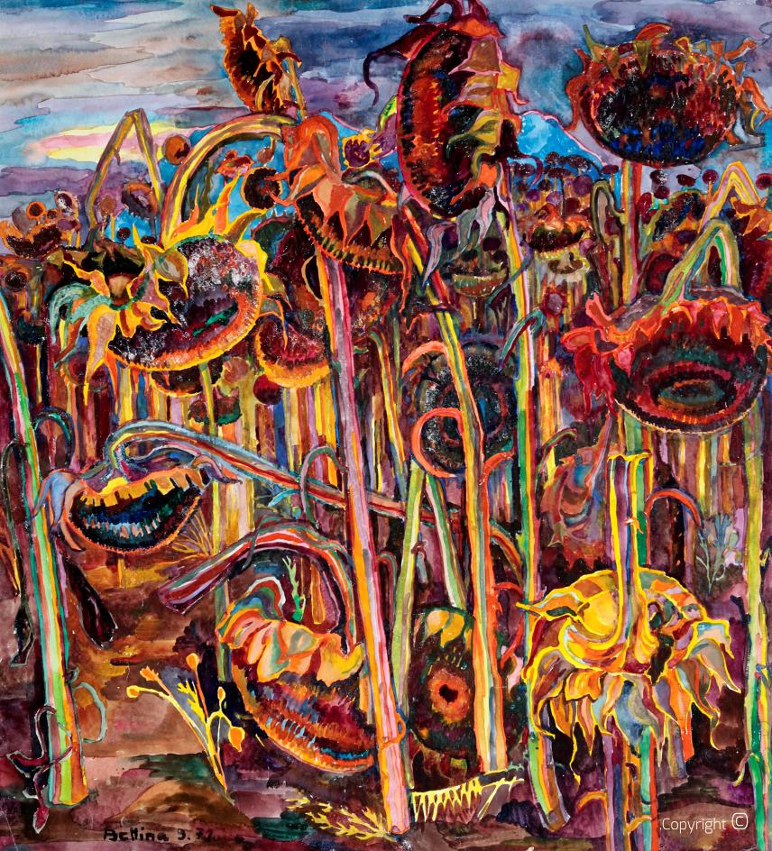 Portrait de fleurs - champ de tournesol près de Guelma, 1972