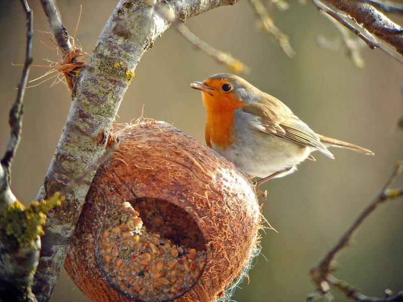 Rotkehlchen Fütterung Futterstelle Winter Vögel Vogel Füttern