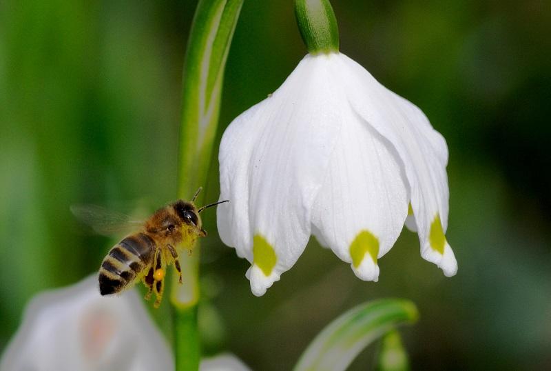 Biene Artensterben Volksbegehren Rettet die Bienen Artenvielfalt Naturschönheit Bayern Aktionskreis LBV Inn-Salzach
