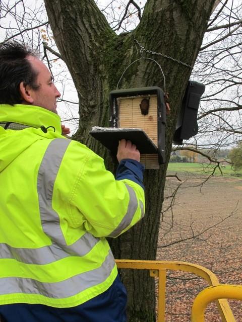 Controle van voor compensatie opgehangen vleermuiskasten