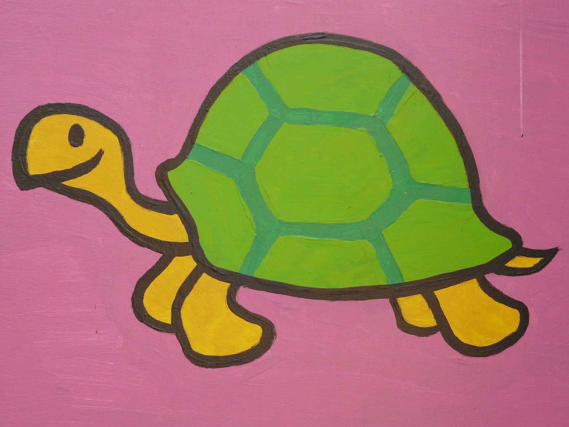 Der Junge und die Schildkröte