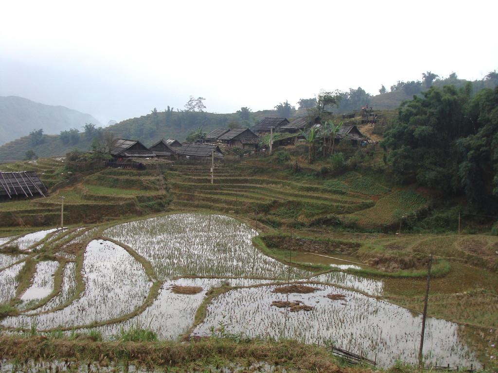 Rizières en terrasse avec un village