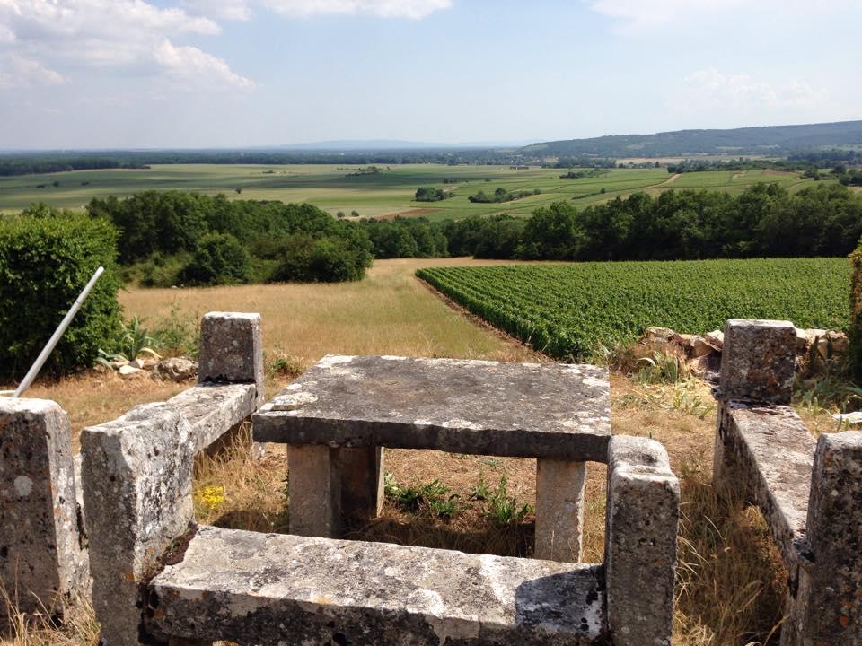 Les vignes de Saint-Hilaire en été
