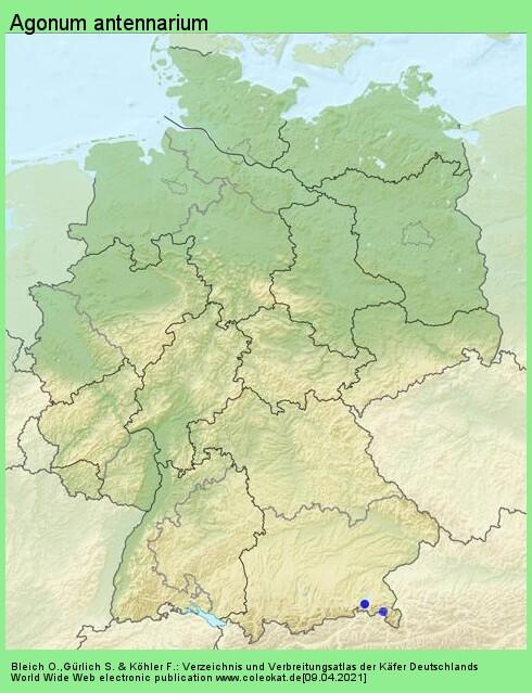 Verbreitungskarte aus Deutschland von Agonum antennarium (Duftschmid, 1812)