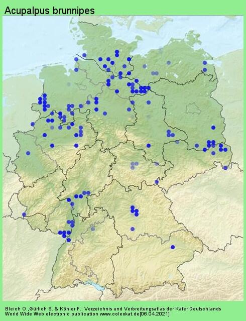 Verbreitungskarte aus Deutschland von Acupalpus brunnipes (Sturm, 1825)