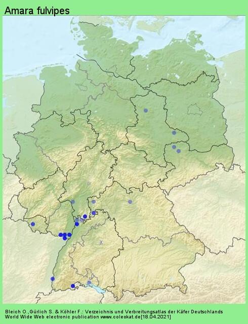 Verbreitungskarte aus Deutschland von Amara fulvipes (Audinet-Serville, 1821)