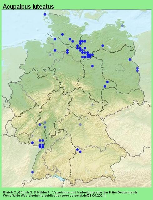 Verbreitungskarte aus Deutschland von Acupalpus luteatus (Duftschmid, 1812)